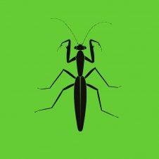 ZC011 – Praying Mantis EP