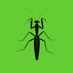 ZC011 – Praying Mantis EP