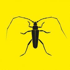 ZC012 – Longhorn Beetle EP